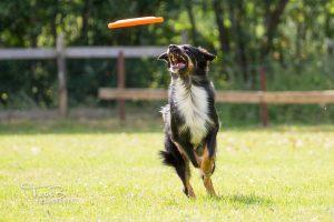 Kennismaken met Dogfrisbee @ Buitenterrein KC Sneek